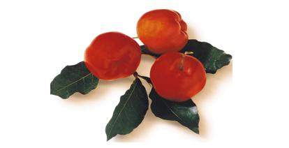 Acerolakirschen zählen zu den Vitamin C-reichsten Pflanzen der Welt